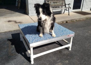 16 inch PVC K9Einstein Table